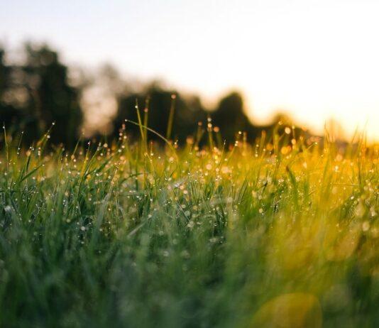 Rasen Unkrautvernichter Test und Erfahrungen