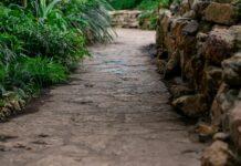 Tipps zum Unkraut im Rasen vernichten